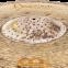 Тарілка MEINL B21NUR BYZANCE JAZZ 21 4